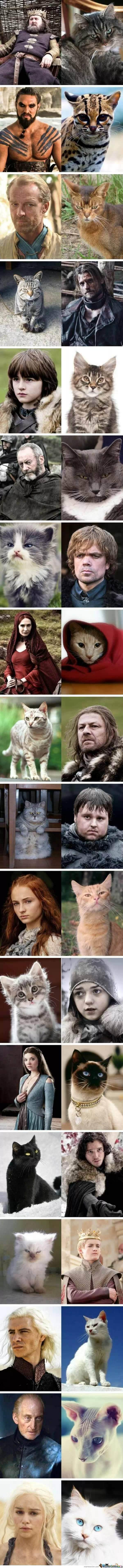 game-of-thrones-cat-version_o_1210494